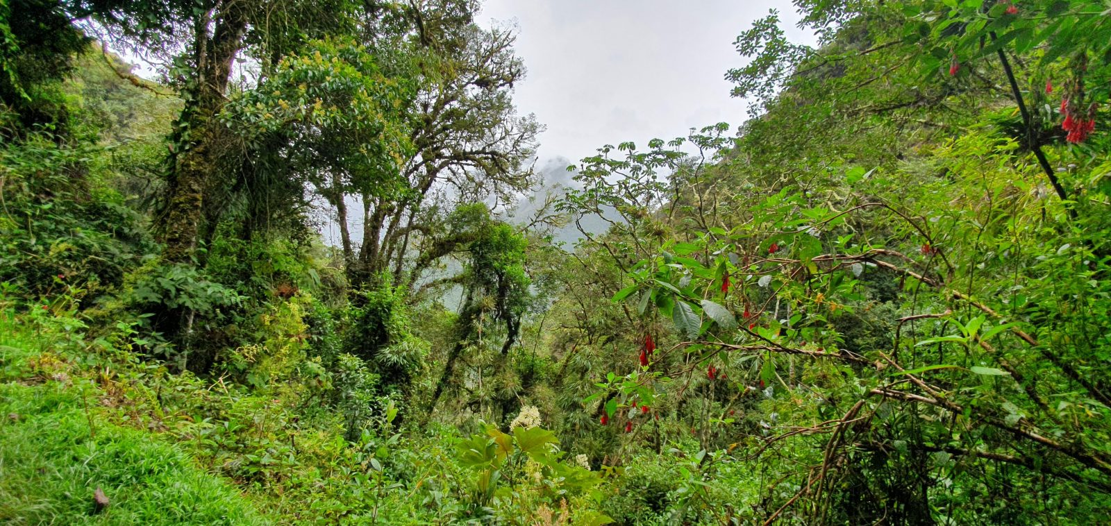 Photo of the nature you encounter when walking the Inca trail in Peru